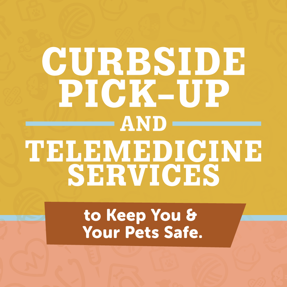 Offering Curbside Pick-Up and Telemedicine - Wildwood Veterinary Clinic