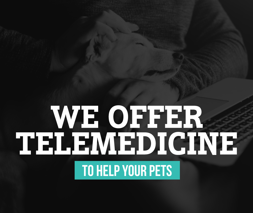 Now Offering Telemedicine Services - Wildwood Veterinary Clinic