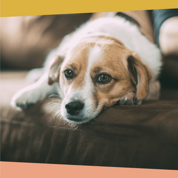 How to prepare your dog for the end of the COVID-19 Stay Home mandate