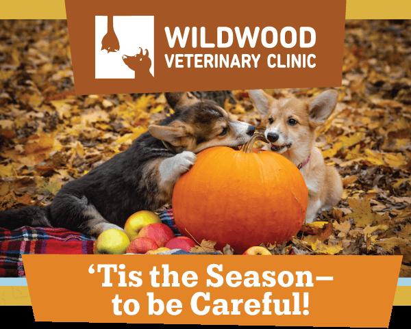 'Tis the Season—to be Careful!