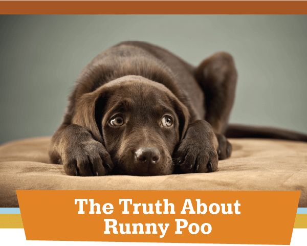 The Truth About Runny Poo